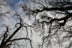Drzewna formacja przeciw niebu Zdjęcia Stock