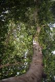 Drzewna fotografia z prowadzić linie fotografia stock