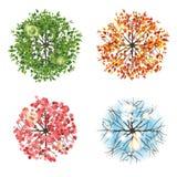 Drzewna ikona w 4 różnych sezonach - odgórny widok Zdjęcie Stock