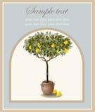 Drzewna ilustracja z cytryn owoc. Zdjęcia Royalty Free