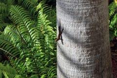 Drzewna jaszczurka na drzewku palmowym obrazy royalty free