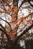 Drzewna jesień z pięknymi liśćmi obraz stock