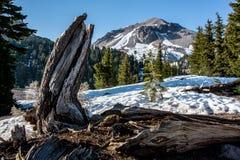 Drzewna karpa pod Lassen szczytem, Lassen parka narodowego ` Fotografia Royalty Free
