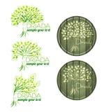 Drzewna kobieta Szablonu logo Zdjęcie Stock