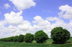 Drzewna kolejka fotografia royalty free
