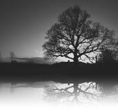 Drzewna korona Obraz Royalty Free