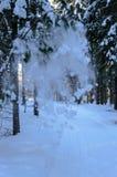 Drzewna lawina w scandinavian zima lesie Zdjęcia Stock