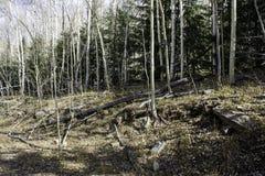 Drzewna linia Obrazy Royalty Free