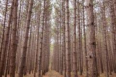 Drzewna linia Obrazy Stock