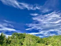 Drzewna linia horyzontu Zdjęcia Stock