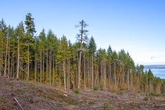 Drzewna linia od wierzchołka wyróbki góra na Vancouver wyspie, BC, Kanada fotografia royalty free