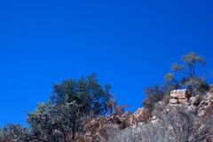 DRZEWNA linia PRZECIW niebieskiemu niebu NA skłonie wzgórze obraz royalty free