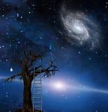drzewna mądrość ilustracja wektor