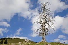 Drzewna ?miertelno?? zdjęcie stock