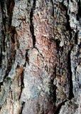 Drzewna opowieść Fotografia Stock