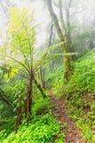 Drzewna paproć obok nożnej ścieżki Zdjęcia Stock