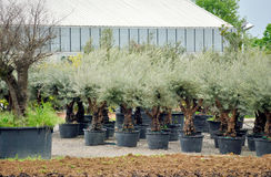 Drzewna pepiniera Fotografia Stock