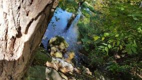 Drzewna perspektywa Obraz Royalty Free
