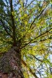 Drzewna perspektywa od ziemi Fotografia Royalty Free