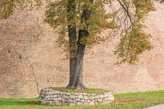 Drzewna pozycja na kopu pokrywającym z starą kółkową skalistą strukturą Obrazy Royalty Free