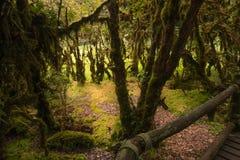 Drzewna rośliny paproć w natura śladu lesie Obraz Royalty Free