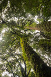Drzewna rośliny paproć w natura śladu lesie Zdjęcie Stock