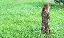 Drzewna roślina na zieleni polu Obraz Stock