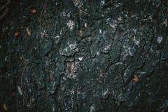 Drzewna skóra Zdjęcie Royalty Free
