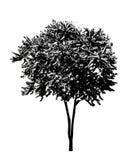 Drzewna sylwetka 04 ilustracji