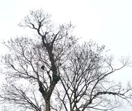 Drzewna sylwetka na chmurnym ranku obraz stock