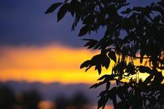 Drzewna sylwetka nad zmierzchem zdjęcie royalty free