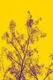 Drzewna sylwetka odizolowywająca na żółtym tle, kopii przestrzeń obrazy royalty free