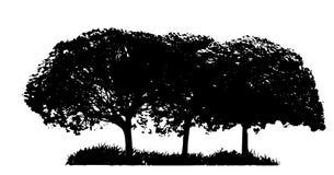 Drzewna sylwetka Odizolowywająca na Białym Backgorund ilustracji