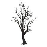 Drzewna sylwetka odizolowywająca na białym tle Obraz Royalty Free