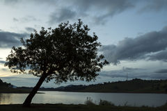 Drzewna sylwetka w późne popołudnie zmierzchu na jeziorze w wsi sao Paulo Obrazy Royalty Free