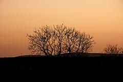 Drzewna sylwetka z ptakami i złocistym niebem Zdjęcie Royalty Free