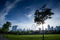 Drzewna sylwetka z Singapur ulotką Zdjęcie Stock