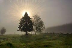 Drzewna sylwetka zaświecał mistycznym słońca jaśnieniem przez mgły Obraz Stock