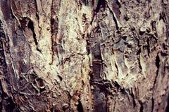 Drzewna sztuka Zdjęcia Royalty Free
