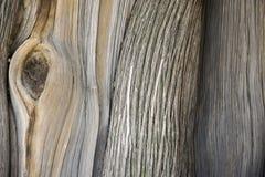 Drzewna tekstura Obraz Royalty Free