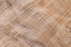 drzewna tekstura drewno wzór dla projekta lub tła Obrazy Stock