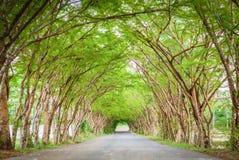 Drzewna tunelowa droga fotografia stock