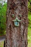Drzewna Twarz Zdjęcie Stock