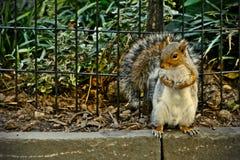 Drzewna wiewiórka Fotografia Royalty Free