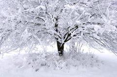 drzewna zima Fotografia Stock