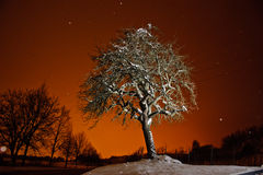 drzewna zima Zdjęcia Royalty Free