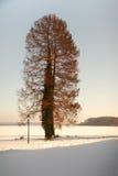 drzewna zima zdjęcie stock
