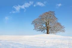drzewna zima Obrazy Stock