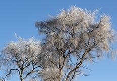 drzewna zima Zdjęcia Stock