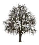 drzewna zima Zdjęcie Royalty Free
